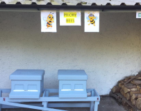 Bee-hives-painted-and-in-situ