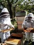 beekeerper-5-2